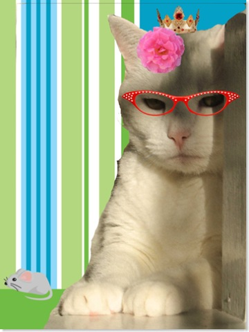 kitten copy